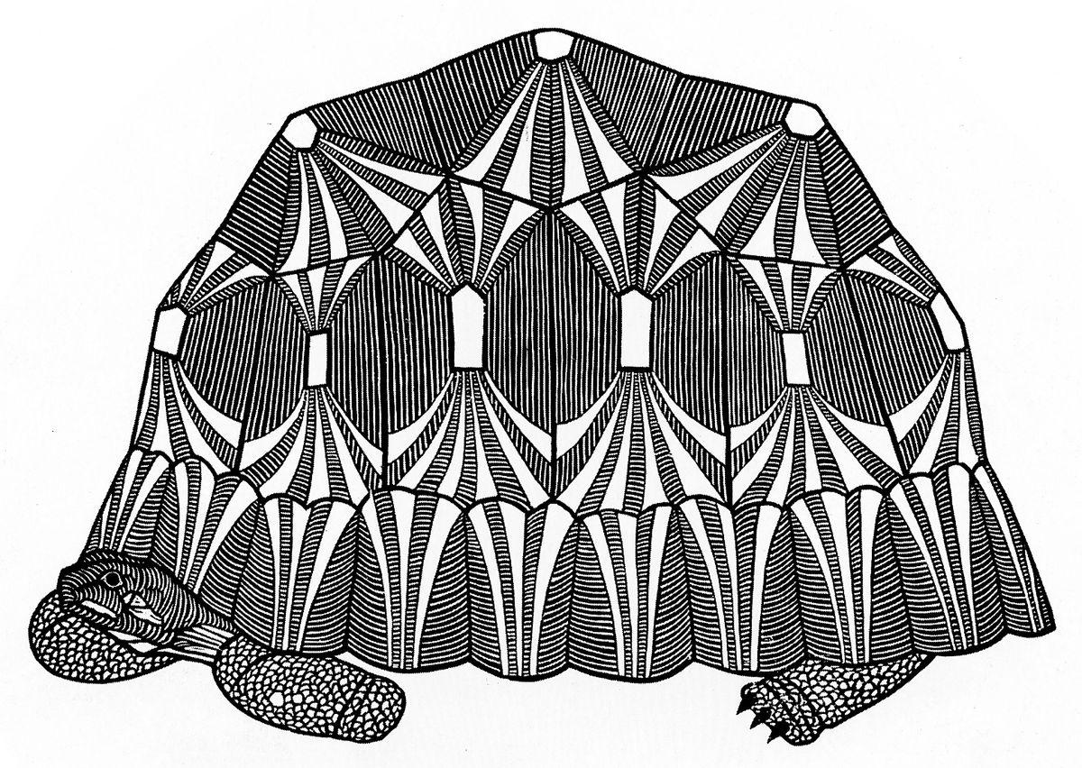 Яків Гніздовський. Черепаха, 1962, дереворит