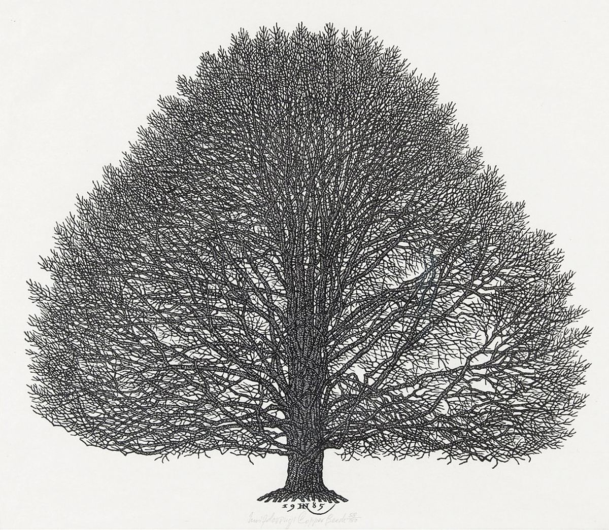 Яків Гніздовський. Бук, 1985, дереворит
